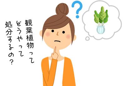 観葉植物ってどうやって処分するの?