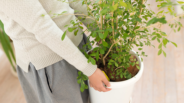 自分で植木を処分する方法とは?